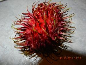 Fuschia colored, spikey fruit